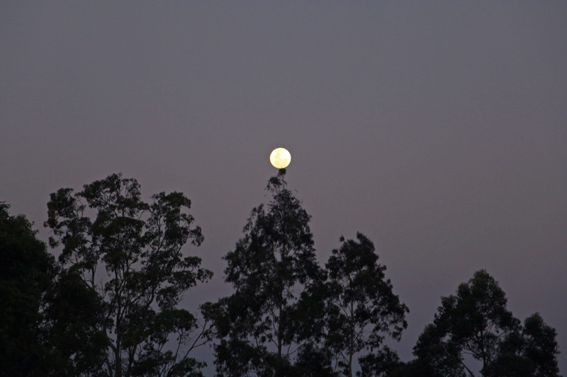 The Master Infusing the Mountain and the Moon