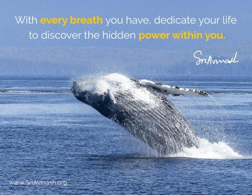 Discover the Hidden Power Within Quote Magnet - Sri Avinash