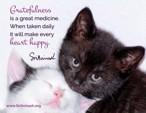 Gratefulness is great medicine quote magnet - Sri Avinash