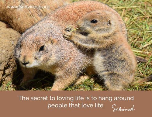 The Secret to Loving Life Quote Magnet - Sri Avinash