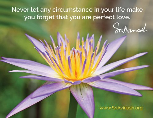You Are Perfect Love Quote Magnet - Sri Avinash