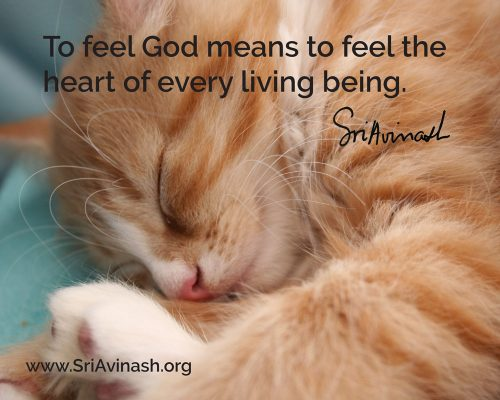 To Feel God Quote Magnet - Sri Avinash