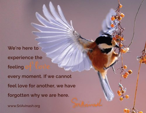 The Feeling of Love Every Moment Quote Magnet - Sri Avinash