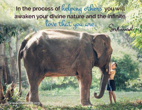 Infinite love that you are quote magnet - Sri Avinash