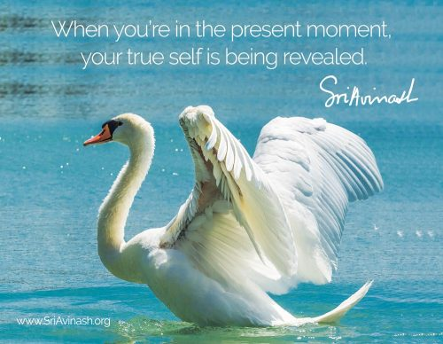 Your True Self Quote Magnet - Sri Avinash